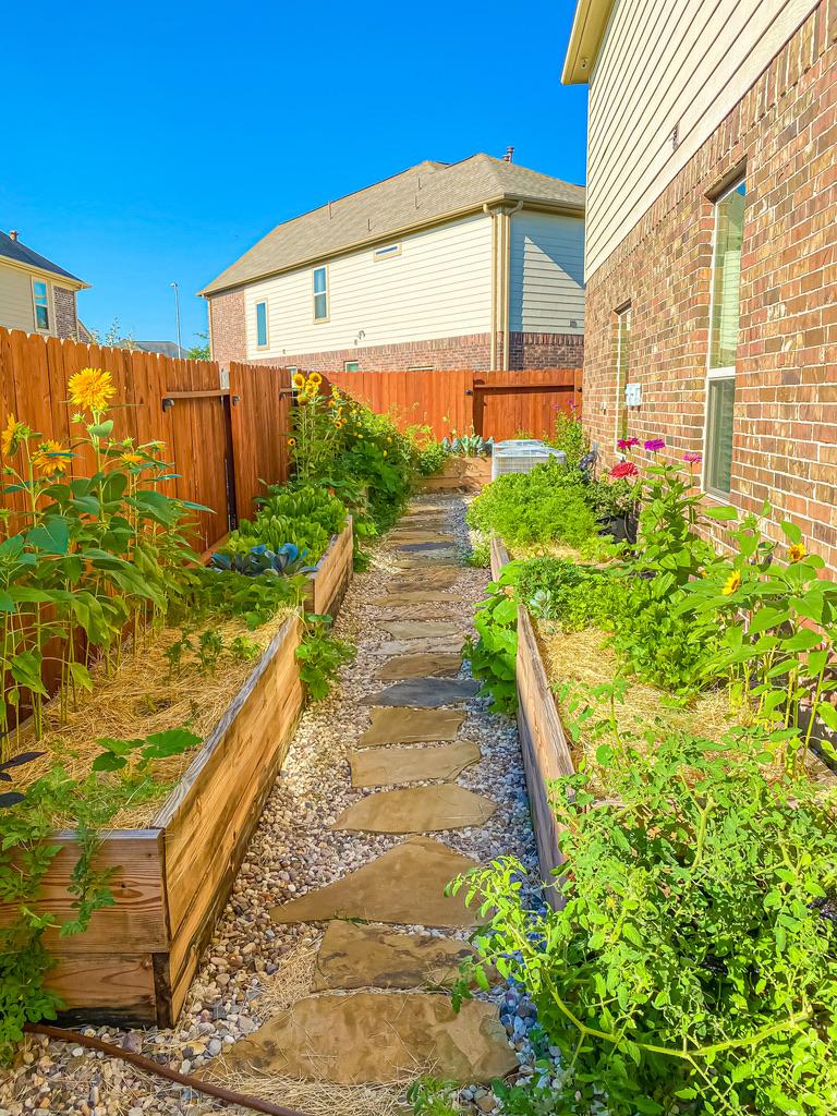Side of house vegetable garden raised beds