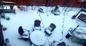 Winter Storm Backyard Orchard