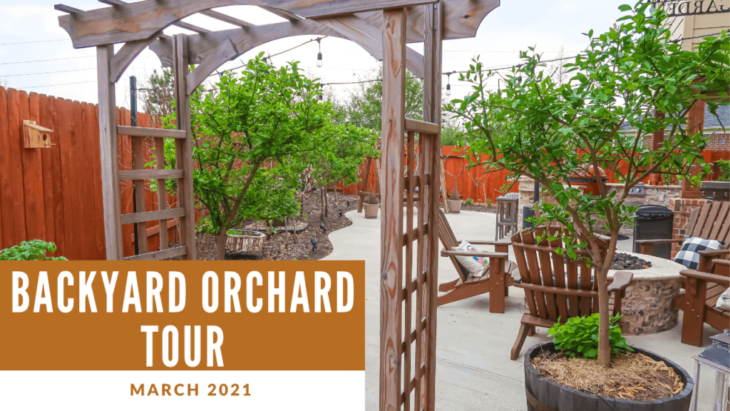 Backyard Orchard March 2021